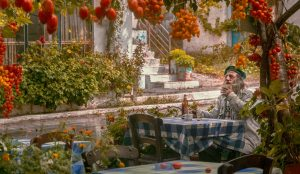 man eating in a garden of tomatoes