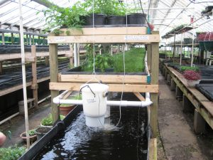 Growing Power's aquaponic system