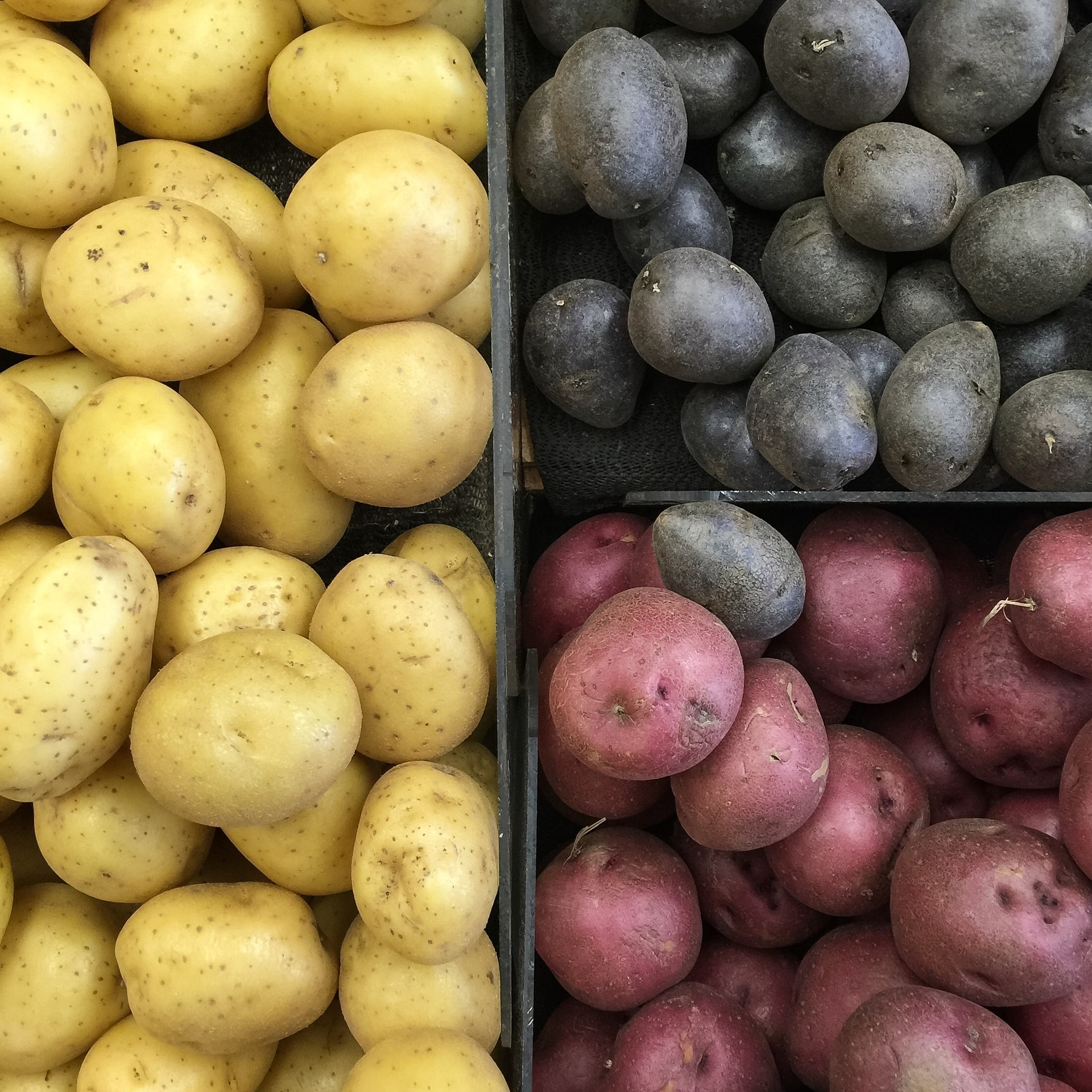 Colorful potatos are perfect for our Healthy Potato Chip Recipe