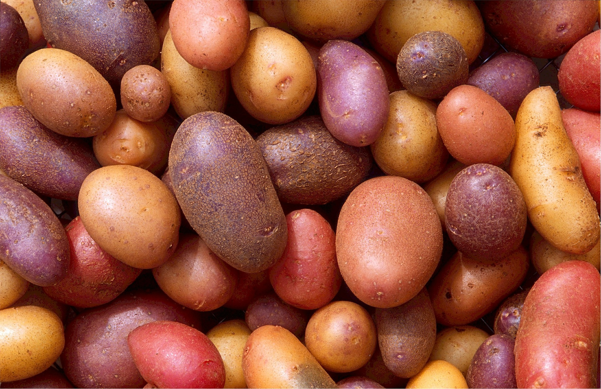 There are thousands of varieties of potatoes in all shapes and colors